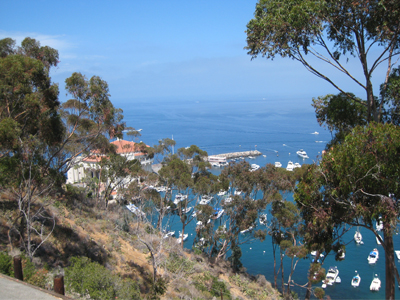 Catalina Scenery